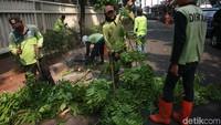 Dinas Pertamanan DKI Jakarta antisipasi pohon rawan tumbang akibat musim kemarau dan intensitas angin kencang yang terjadi belakangan ini.