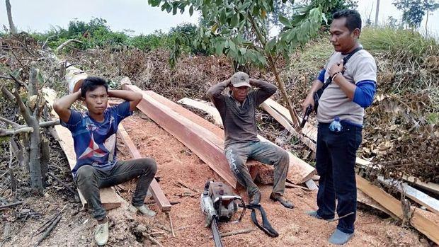 Polres Inhu Temukan Aktivitas Ilegal Logging di Taman Nasional