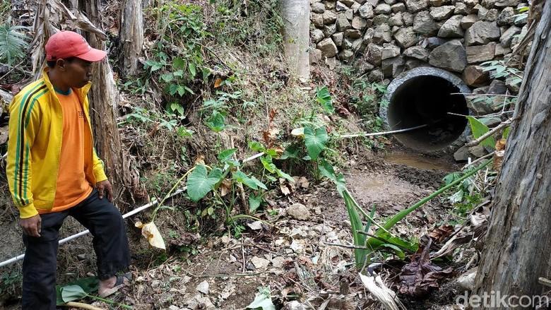 Jejak Harimau di Pacitan, Warga Was-was Hingga Tak Berani ke Ladang