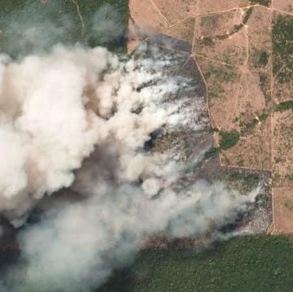 Kebakaran Bikin Lahan Hutan Amazon Hilang Drastis