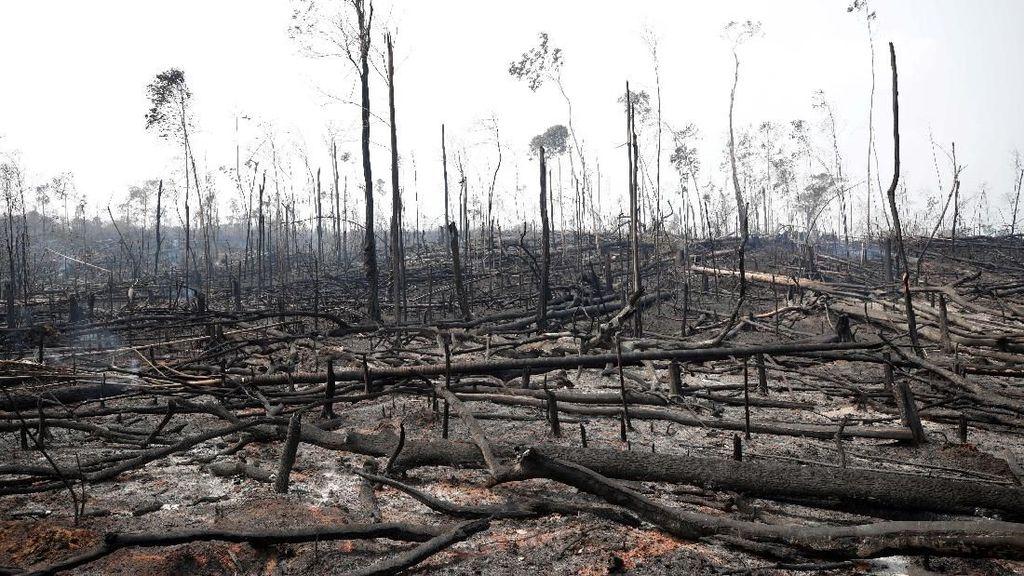 Hutan Amazon Terbakar Gara-gara Produksi Daging Sapi?