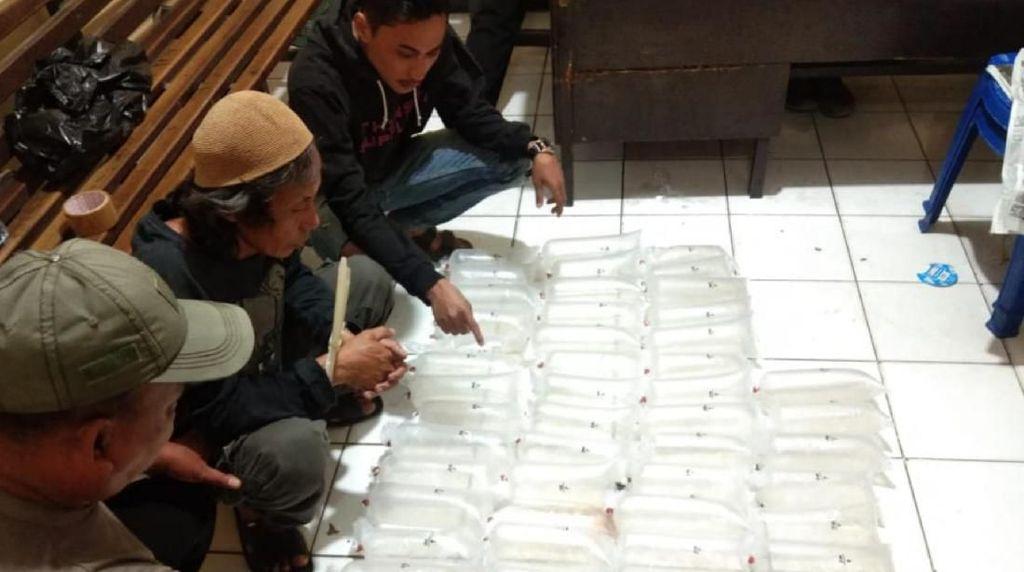 Polres Sukabumi Gagalkan Penyeludupan Benur Senilai Miliaran