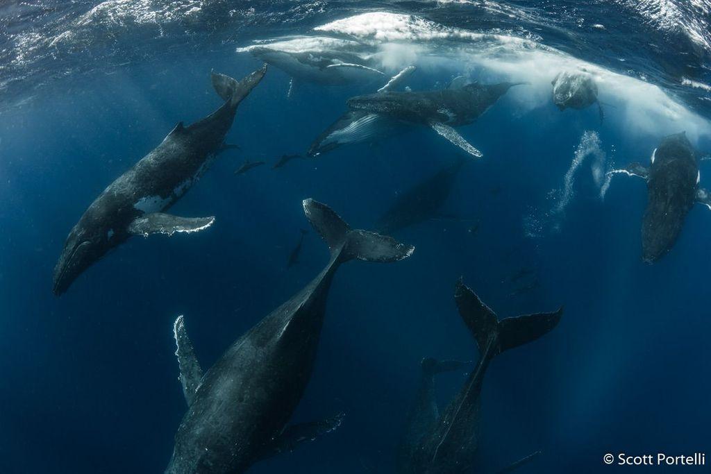 Pemenang kategori Animal Behaviour: Scott Portelli, New South Wales. Canon 1DX Mk II, Canon 8–15mm fisheye, 1/320, f/8, ISO 200. Foto: Australian Geographic Nature Photographer of the Year