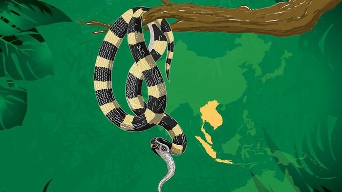 Foto: Ilustrasi ular (Infografis detikcom)