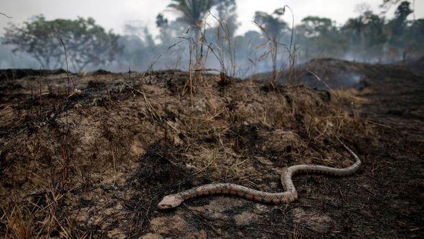 Leonardo DiCaprio Janjikan US$5 Juta Untuk Kebakaran Amazon