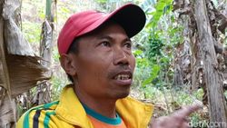 Khawatir Diserang, Warga Pacitan Ingin Harimau Liar Dipindahkan