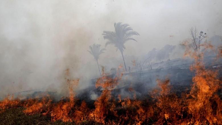 Kebakaran di hutan Amazon (REUTERS/Ueslei Marcelino)
