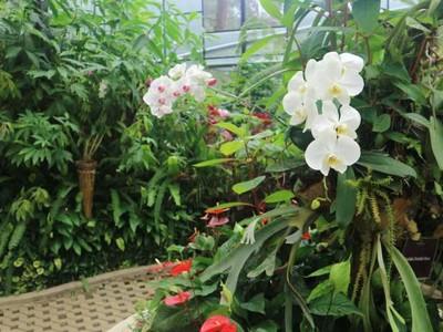 Foto: Aneka Anggrek Langka Ada di Taman Cantik Ini