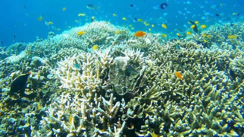 Ilustrasi terumbu karang (Foto: iStock)