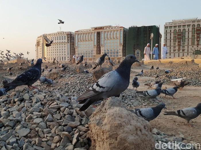 Jemaah haji yang tengah berada di Madinah berbondong-bondong ziarah ke Baqi, pemakaman tempat Usman bin Affan dan para sahabat Nabi dikuburkan.