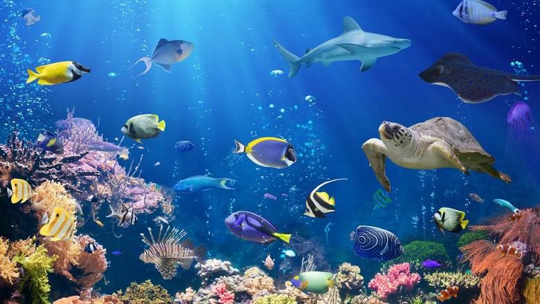 Ilustrasi Great Barrier Reef di Australia. (Foto: iStock)