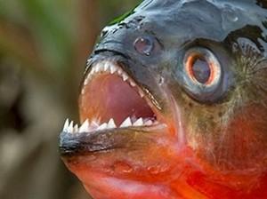 Pertama di Dunia! Restoran Ini Sajikan Ramen Ikan Piranha