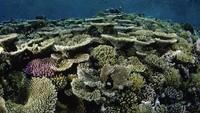 Great Barrier Reef Terancam, Pemerintah Australia Digugat 2 Remaja