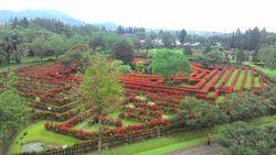 Berbunga-Bunga di Taman Bunga Nusantara