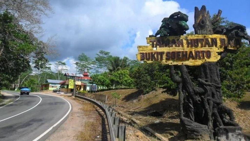 Mengenal Tahura Bukit Soeharto, Area Ibu Kota Pilihan Jokowi