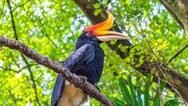 Ragam Spesies Hewan Unik di Kalimantan