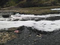 Aliran air Sungai Cileungsi tampak hitam dan berbusa