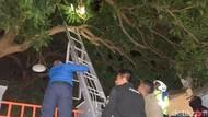 Bikin Resah Warga di Probolinggo, Sarang Lebah di Pohon Mangga Dievakuasi