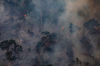 Kebakaran yang melanda hutan di Amazon, Brasil.