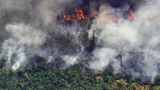 kebakaran Amazon