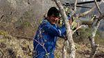 Kebakaran Hebat di Hutan Amazon Menjalar Hingga Bolivia