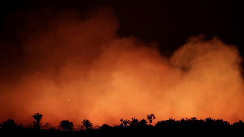 Deforestasi Disebut Jadi Penyebab Utama Kebakaran Hutan Amazon