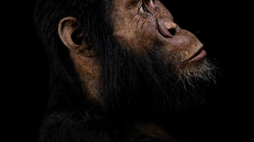 Eksis 3,8 Juta Tahun Silam, Inikah Nenek Moyang Tertua Manusia?
