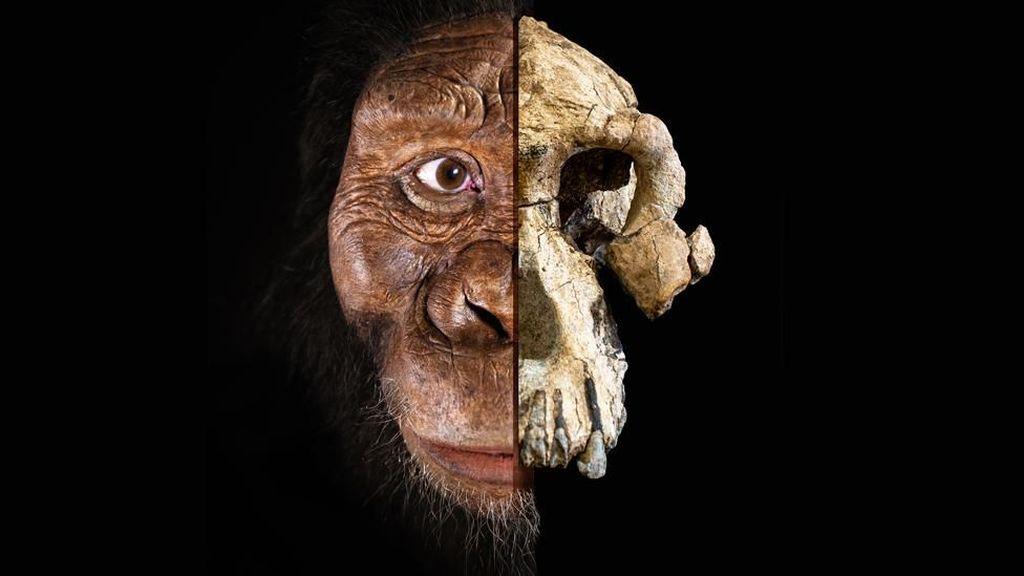 Temuan Tengkorak 3,8 Juta Tahun Picu Perdebatan Asal-usul Evolusi Manusia