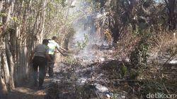 10 Hektar Hutan di Banggai Terbakar Akibat Warga Bakar Sarang Semut