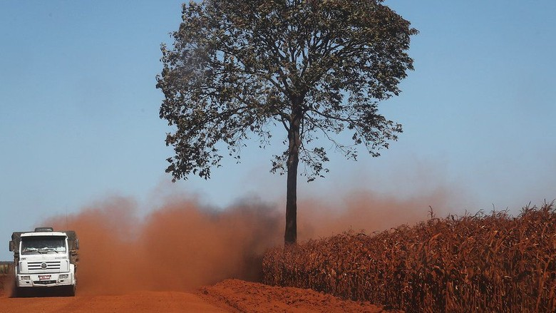 Kebakaran Amazon Bisa Bikin Hutan Tropis Berubah Jadi Padang Rumput