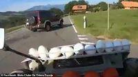 Waduh! Pemotor Ini Lempar Telur dan Tomat ke Mobil yang Menghalanginya