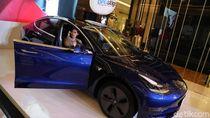Blue Bird hingga Hotman Paris Naksir Tesla Paling Murah