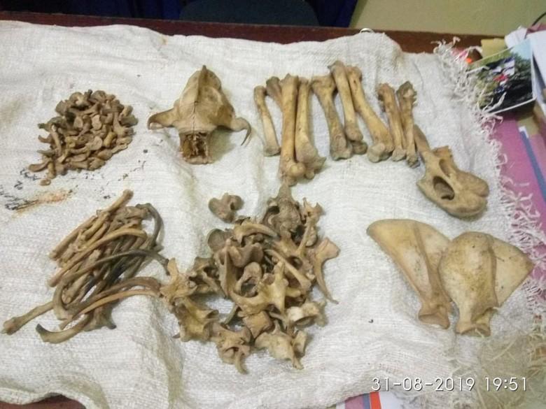 Polisi amankan Pedagang Bagian Tubuh Harimau Sumatera