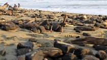 Duh, Limbah Batu Bara Cemari Pantai di Aceh