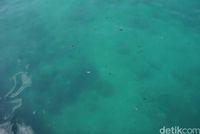 Ikan di Palabuhan Tenau (Syanti/detikcom)