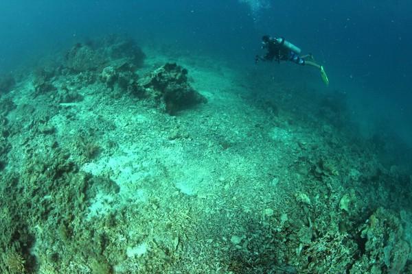 Catatan Lembaga Ilmu Pengetahuan Indonesia (LIPI), jumlah lokasi terumbu karang Spermonde yang tergolong baik menurun. (Ria Qorina/Green Peace)