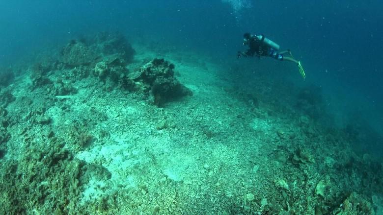 Bawah laut Kepulauan Spermonde (Ria Qorina/Green Peace)