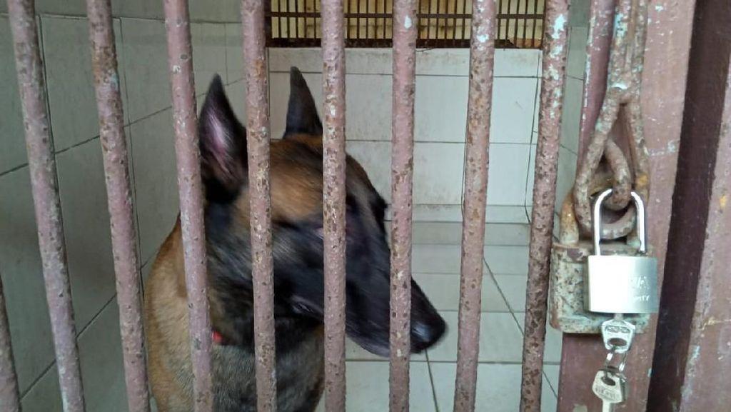 Gigit ART Hingga Tewas, Anjing Bima Aryo Bisa Kembali?