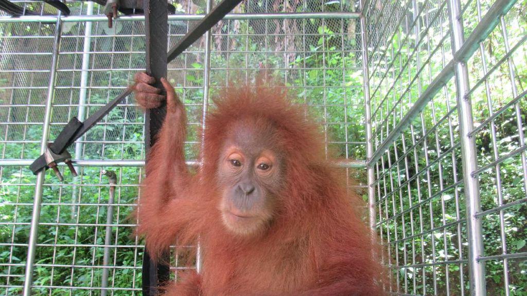 10 Hewan Langka yang Hanya ada di Indonesia