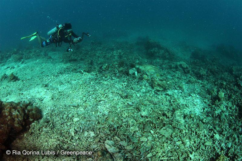 Sebuah kelompok pecinta lingkungan, Pembela Lautan Greenpeace Indonesia melakukan pendataan terhadap terumbu karang di Kepulauan Spermonde. (Ria Qorina/Green Peace)