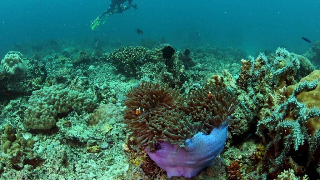 Ekosistem Bawah Laut Makassar Mulai Mengkhawatirkan