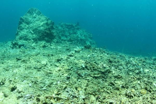 Penyelaman dilakukan di 3 titik yaitu Pulau Barrang Lompo, Pulau Barrang Caddi, dan Kodingareng Keke. Saat turun, bukan karang-karang cantik yang dtemui. (Ria Qorina/Green Peace)