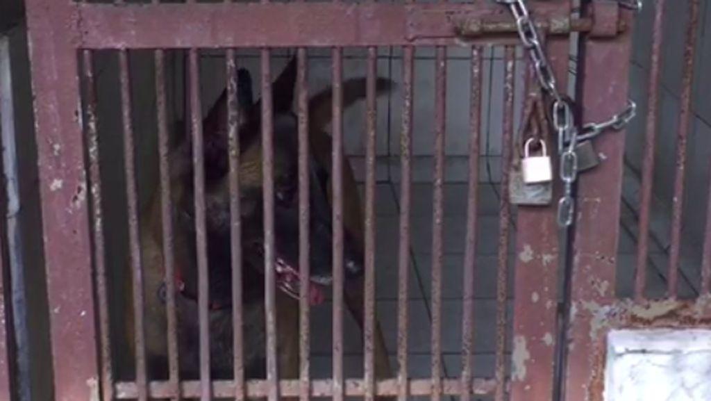 Anjing Serang Pembantu hingga Tewas, Ibu Bima Aryo Diperiksa