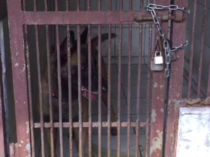 Foto: Sparta, anjing milik Bima Aryo, yang tewaskan ART (Dok. Balai Kesehatan Hewan Ragunan)