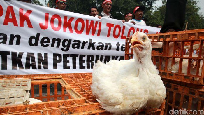 Dalam aksinya, mereka membawa ayam dan kandangnya.