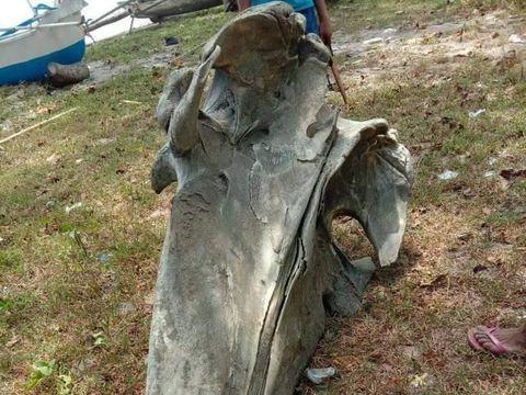 Tulang yang ditemukan di pinggir pantai Siwalempu, Donggala, Sulteng/DOK. Polres Donggala
