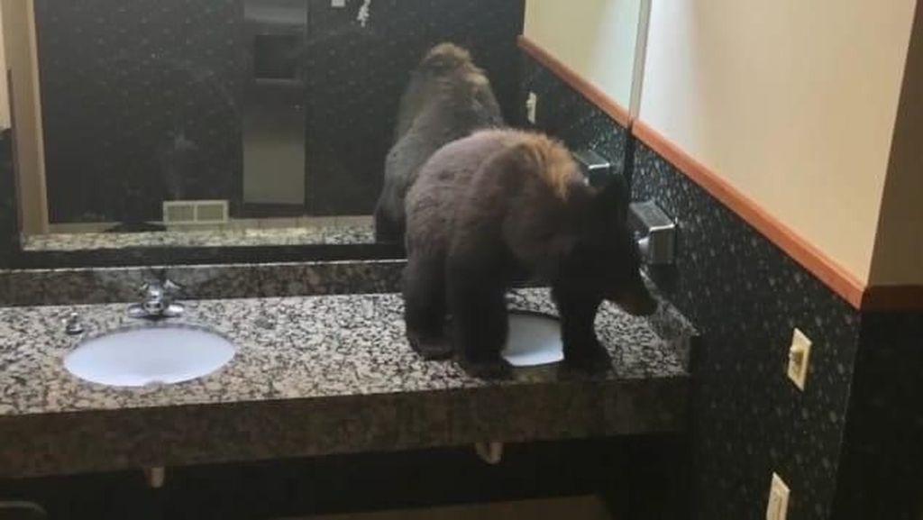 Pulang ke Penginapan, Turis Kaget Ada Beruang di Toilet