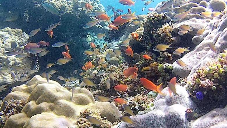 Terumbu karang di bawah laut Calabai (Faruk/detikcom)