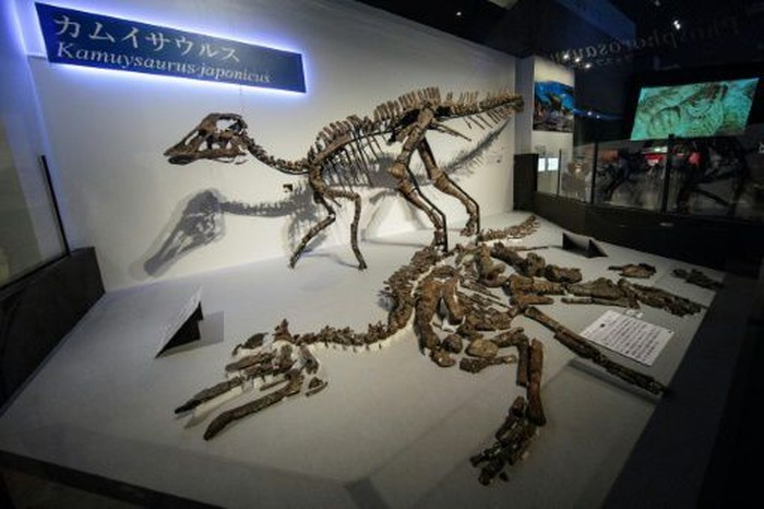 Kamuysaurus japonicus. Foto: AFP