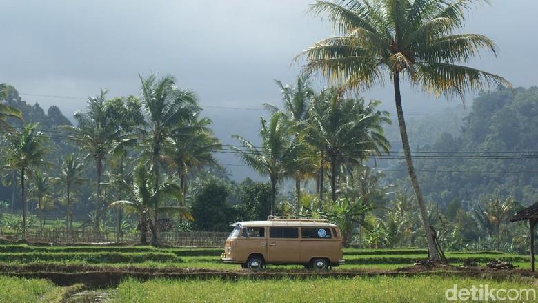 Wisata mobil antik di Banyuwangi (Ardian Fanani/detikTravel)